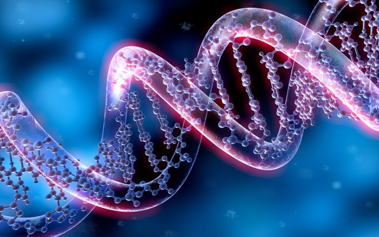genetics responsible for DHT and baldness hair loss